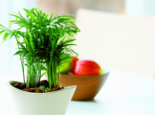 植物吸收有害气体净化空气是否如预想一样